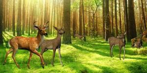 deer-73599_640